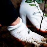 Kolejny młody las zasadzony – jak fryzjerzy Davines dbają o planetę